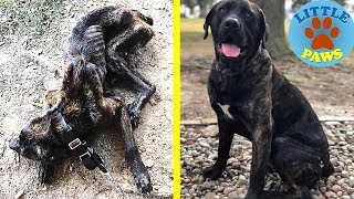 Abandoned Dog Rescued- AMAZING TRANSFORMATION! A Happy Ending Heartwarmer.