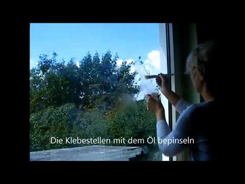 Fenster Aufkleber entfernen