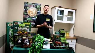 Veiled Chameleon  Setup & Care