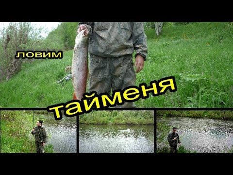 Ловим тайменя на реке ЯЯ.Catch trout on the river YAYA.