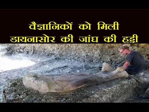 इस देश में वैज्ञानिकों को मिली डायनासोर की साढ़े छह फ़ीट लंबी जांघ की हड्डी, देखें वीडियो