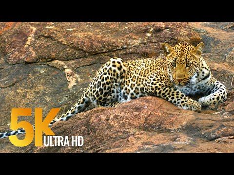 5k african wildlife virtual trip to kruger national park in