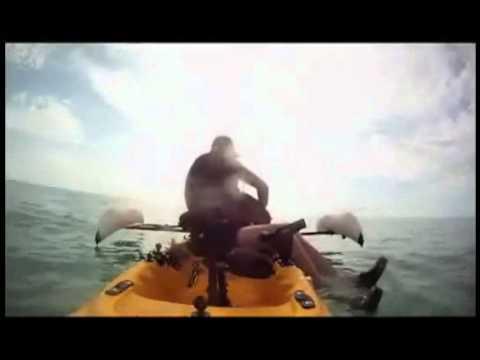 דייג חובב מציל כלב מטביעה