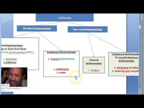 Giardia behandling flagyl