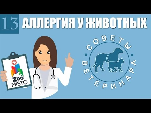 Аллергия у домашних животных | Виды аллергии у собак и кошек | Лечение аллергии | Советы Ветеринара