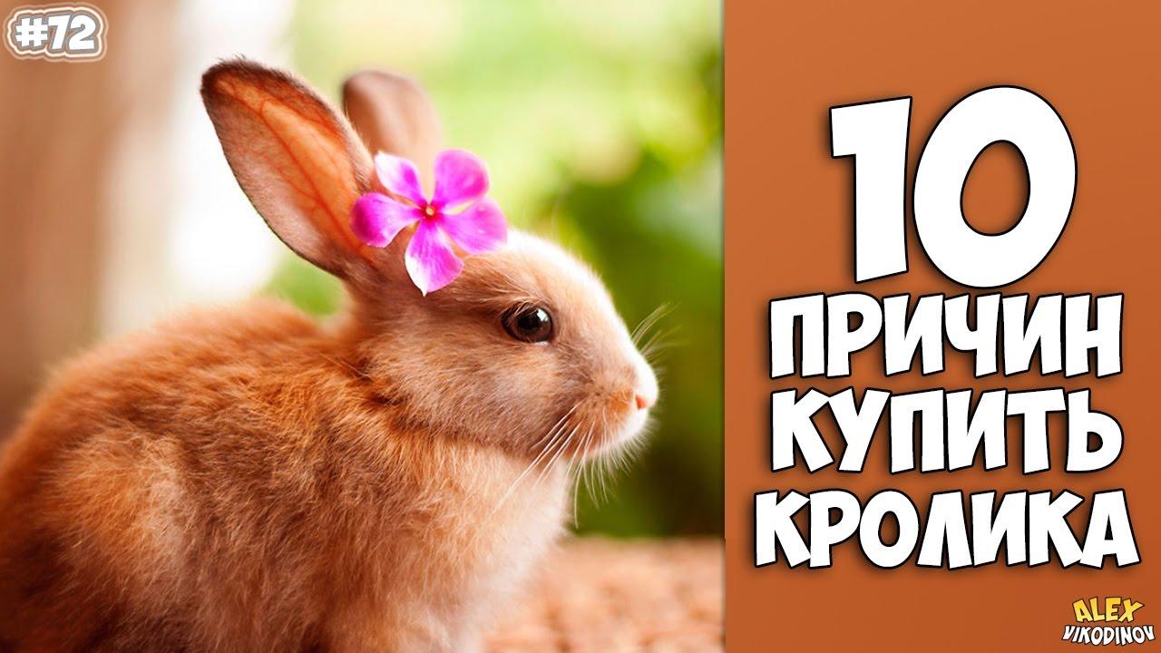 Как ухаживать за кроликом
