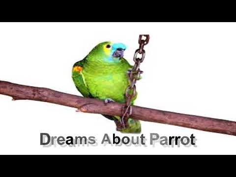 Dream about parrot | Dreams Meaning and Interpretation