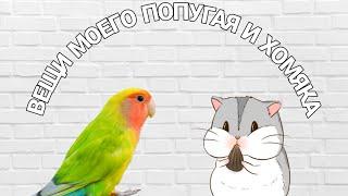 Вещи моего попугая и хомяка💙