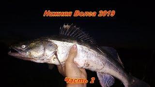 Рыбалка на нижней волге 2019 отчеты
