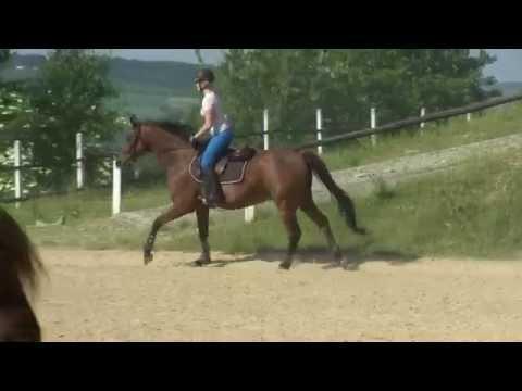 Co się dzieje, gdy dziewczynka wlać patogenu koni