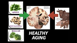 Healthy, (Nutrient) Wealthy And Wise: Diet For Healthy Aging   Research On Aging