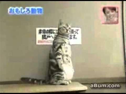 這隻貓是人扮的嗎?竟然懂得站立~