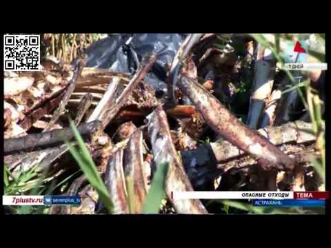 О факте обнаружения биологических отходов в Астраханской области