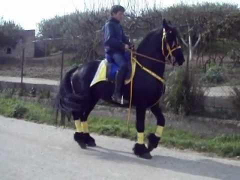 A quanti lattivatore di cavallo opera