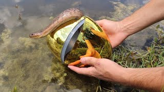 GOLDEN EGG Fish Trap Catches Slithery SNAKE!! **JAWS ATTACKS**