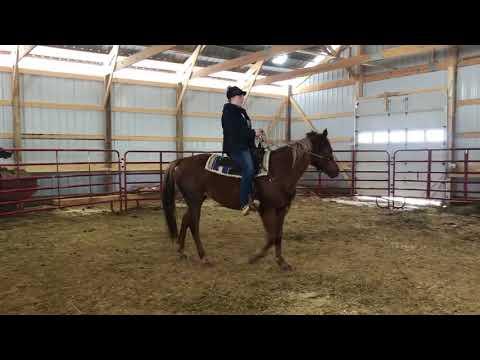 Karmell, an adopted Quarterhorse & Arabian Mix in Colfax, WI