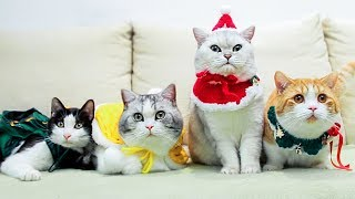 [Cat Live] What's my cats doing in Christmas? Time for fancy-dress show!