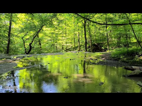 Life in 8K - The lush Terrace Waterfalls of the Niagara Escarpment at...