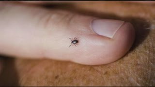 Ticks are out early this year in western Massachusetts