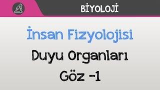 İnsan Fizyolojisi - Duyu Organları / Göz -1