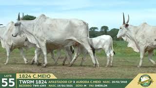 ESTRADA C. MEIO || 1796 C. MEIO || 1831 || 1824 ||