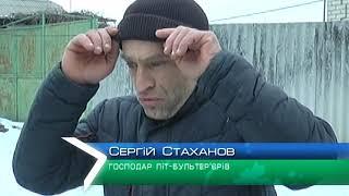 На Харківщині два піт-бультер'єра напали на людину