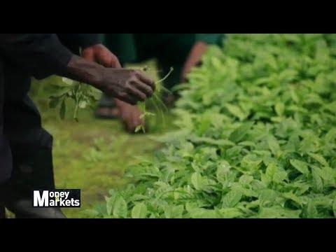 , title : 'Corporate Faming Model Solution to Peasant Farming in Uganda