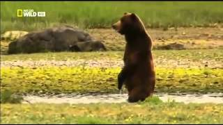 Discovery Channel , Discovery Animal, Медведи острова Страха Аляс�