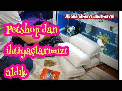 PETSHOP ALIŞ VERİŞİNDEN ALDIKLARIMIZ, akvaryum balıkları, ciklet akvaryumları, akvaryum videoları,