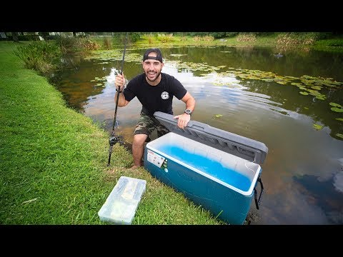 Relocating PET BASS From Backyard POND!! (transferring fish)