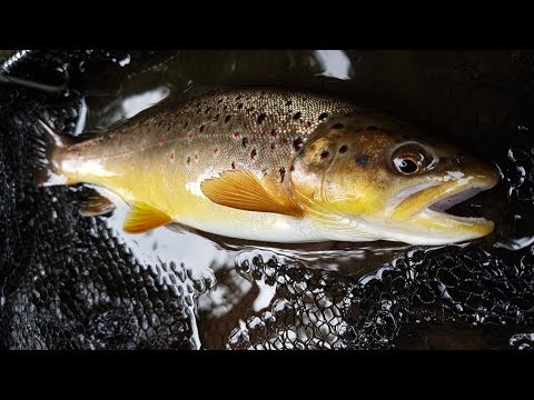 Fly fishing on a popular trout stream