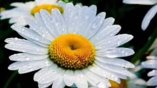 Цветы, Оркестр Поля Мориа