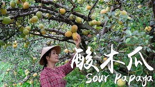 Sour Papaya - My idea of the King of Sour Fruits