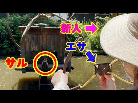 驚異の守備力でエサをキャッチするサル! Feeding capuchin battle