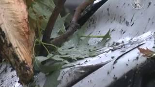 Впала гілка| Телеканал Новий Чернігів