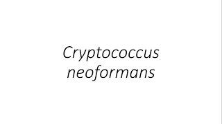 Cryptococcus Neoformans Standort.