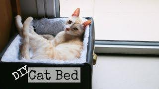 DIY Cat Bed With No Money | DanDIY