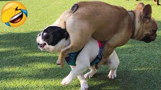 Cute Dogs And Cats That Will Make You Laugh 😂 - Funny Animal Compilation #2