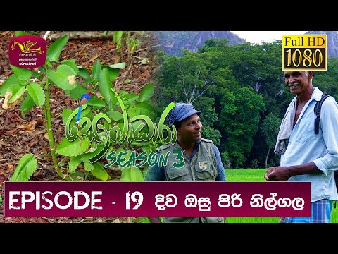 Sobadhara - Sri Lanka Wildlife Documentary | 2019-03-22 | Elephant in Sri Lanka