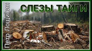 Петр Лощинин - Слезы Тайги