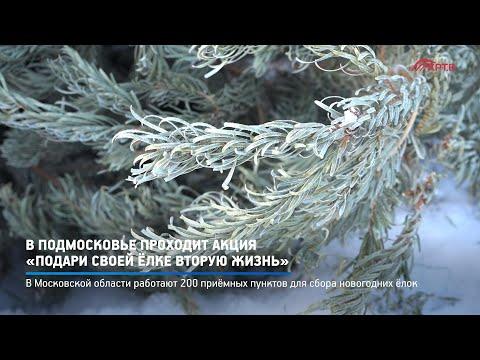 Министерство ЖКХ Московской области объявило о сборе отработанных новогодних ёлок