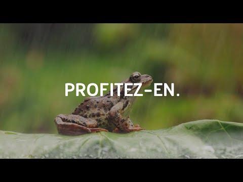 Video Noe 3