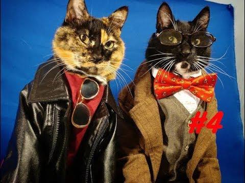 Смешное видео с котиками (Funny Cat) #4