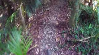 """just-Keeps-Going"" part 2, Glenbervie Forest, Northland, NZ"
