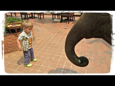 , title : 'Приколы с Животными и Детьми | Fun with Children and Animals #469'