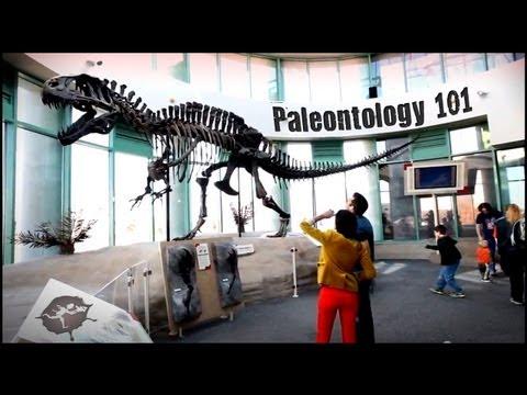 Paleontology 101 - Untamed Science