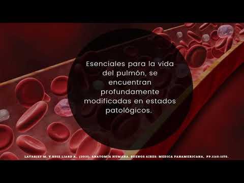Articolazioni intervertebrali lartrosi