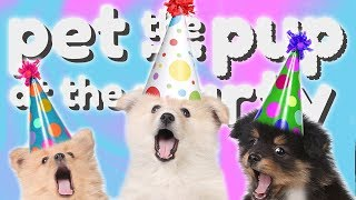 PUPPOS EVERYWHERE! | Pet The Pup At The Party