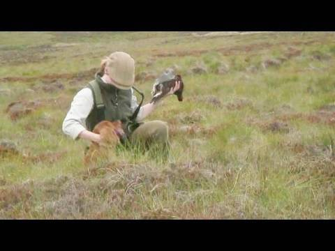 Fieldsports Britain – Grouse over pointers + high pheasants + giant carp funeral – episode 40