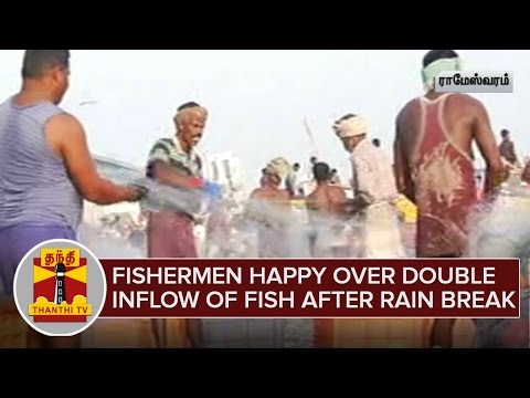 Fishermen-happy-over-Double-Inflow-of-Fish-after-Rain-break-ThanthI-TV